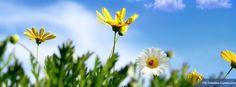Sunny Spring Sky Cover