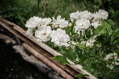 © bysahlia.com Gmunden Austria, Garden, Plants, Graphics, Garten, Lawn And Garden, Gardens, Plant, Gardening