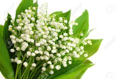 Lily of the Valley, perfect for your bedroom