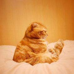 &may with mami @ashmiemu Yoga cat.修業中…..Instagram photo | Websta (Webstagram)