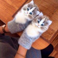 Lv Lietotāju Foto Galerijas – L Mittens Pattern, Knit Mittens, Knitted Hats, Knitting Stitches, Knitting Patterns, Crochet Baby, Knit Crochet, Needle Felted Cat, Felt Cat