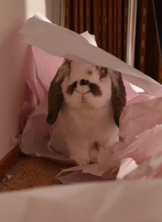 Paper makes a great toy for rabbits. They like to toss it and chew it.