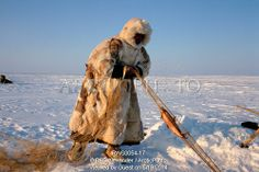 Image of sasha yeyvi, a tundra nenets reindeer herder checks a fish net set under ice on a lake. gydan peninsula, w.siberia, russia by Arcti...