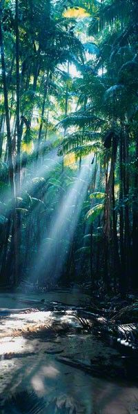 ✯ Rainforest - Fraser Island - Queensland, Austraila