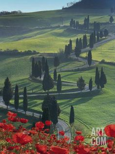 Winding Road and Poppies, Montichiello, Tuscany, Italy, Europe Photographic Print by Angelo Cavalli at Art.com