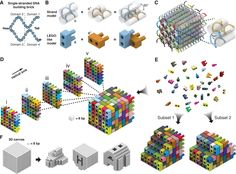 Design of DNA brick structures analogous to structures built of LEGO® bricks. A 32-nt four-domain single-stranded DNA brick. Each domain is 8 nt in length.