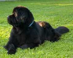 Just enjoying the day, my favorite thing about newfies