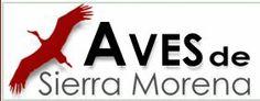 Aves de Sierra Morena. Guías