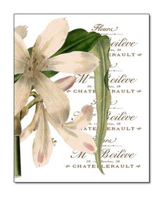 Floral 8x10 Print  Giclee  Beautiful White flower by MomentsOfArt, $18.00