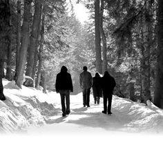 The band Agalloch in the forest...this explains their last album cover