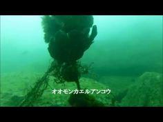 平沢マリンセンターでの2ビーチダイビング