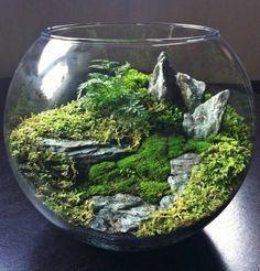 terrarium selber bauen schönes terrarium für pflanzen