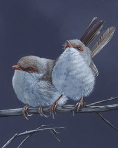 Fairy Wrens print of acrylic painting by LouiseDeMasi on Etsy