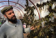 In Uruguay's marijuana experiment, the government is your pot dealer