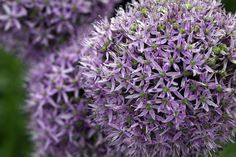 Gardening Can Help Depression, Gardeners' World Magazine Survey Finds (Try gardening with diatomaceous earth for an organic and natural pesticide)