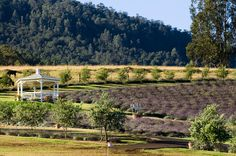 Lavender Fields | White Orchid Wedding - Hawaii Wedding Planners