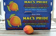 Mac's Pride Big Red Peaches | ©homeiswheretheboatis.net #easy #summer #peach #recipes #desserts Dessert Dips, Dessert Recipes, Summer Desserts, Easy Desserts, Apple Dumpling Recipe, Peach Dumplings, Chai Recipe, Fruit Cobbler, Blueberry Crumble