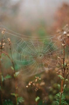 h4ilstorm:  Spider web (by Flashbaxxx)