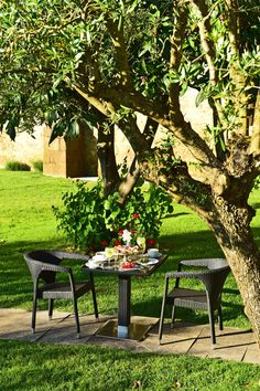 Pousada Crato is a hotel in Crato, Alentejo. Located in a monastery, this charming hotel with pool will provide you with an unforgettable stay. Hotel Pool, Outdoor Furniture, Outdoor Decor, Mornings, Park, Nature, Home Decor, Naturaleza, Decoration Home