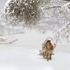 Sleigh ride in the snow I Love Snow, I Love Winter, Winter Is Coming, Winter White, Noel Christmas, Winter Christmas, Country Christmas, Dashing Through The Snow, Winter Magic