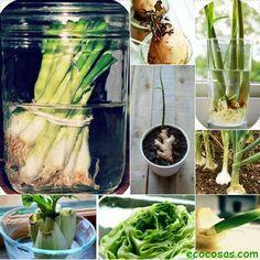 Recreciendo plantas