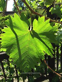 Henibean: Productivity...& the grape vine!