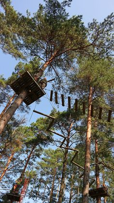 FlowPark in Turku, Finland. Awesome tree climbing experience!