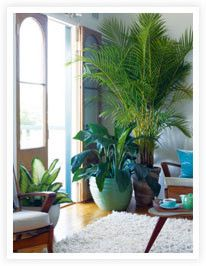 Not in love with this pic but here is a great article on indoor plants. Green your spaces people!