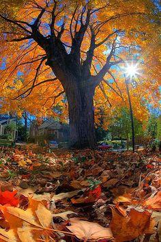 Autumn in Decatur, Georgia