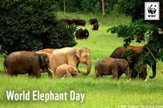 elephants in Kui Buri national park thailand World Elephant Day, Wild Elephant, Asian Elephant, Elephant Love, National Elephant Day, Thailand Elephants, Love Is An Action, Virtual Travel, Wildlife Conservation