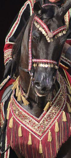 Equine photography - Arabian horse native costume.