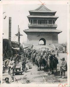 Camel train Peking 1905