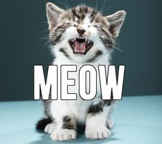13 Struggles Of People Who Meow All The Time