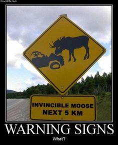 Warning: Invincible moose