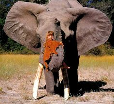 I just want to hug you, giant elephant!!!!! <3