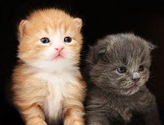 Two cute kittens wallpaper Cute Kittens, Baby Kittens, Cats And Kittens, Kitty Cats, Unicornios Wallpaper, Kitten Wallpaper, Training A Kitten, Baby Animals, Cute Animals
