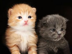 Adopt a kitten today. Or two. Or a whole litter...