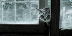 Kedi Sağlığı | Kedi Sahipleri