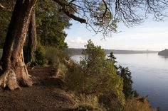 Point Defiance Park  If you only go to the zoo, you're missing out! Explore the trails. Play at Owens Beach!