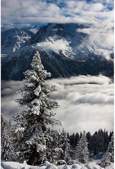 wintery treescape