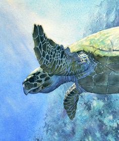 seaturtle watercolor