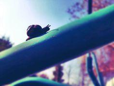 Schneckentempo * - Gartenkumpel #schnecke #nature #Doppellotte #Onlineshop