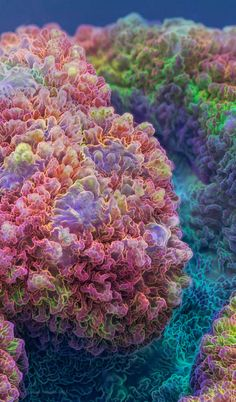 Ultra-macro Coral fluorescent light under appropriate total spectrum. These magnificent creatures seem dull and colorless under white light, however, since they are exposed to the natural spectrum, they begin to shine with a whole rainbow of colors.