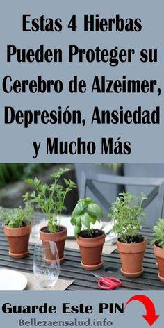 Estas 4 Hierbas Pueden Proteger su Cerebro de Alzeimer, Depresión, Ansiedad y Mucho Más. #Hierbas #Cerebro #salud #remedios #Alzeimer #Ansiedad #Depresión