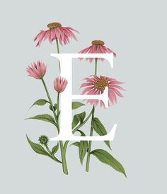 Exploring the fascinating range of edible flowers, this illustrated alphabet…
