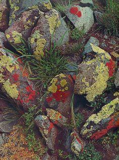 Pedras com líquens e musgo. Líquens são seres vivos simples, constituídos pela simbiose de mutualismo entre fungos e algas ou cianobactérias.