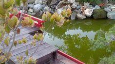 giardino giapponese roma - Cerca con Google