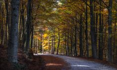 Autumn light  by ilias nikoloulis