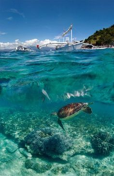 Get up close and personal with #SeaTurtles and an abundance of #marine life at #TobagoCays, The Grenadines