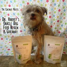 """Dr. Harvey's strives themselves on using only the finest ingredients in their Oracle dog food. This """"just add water"""" homemade dog food is great!  Check out our review and giveaway: http://bit.ly/OracleTCM #Sponsored"""